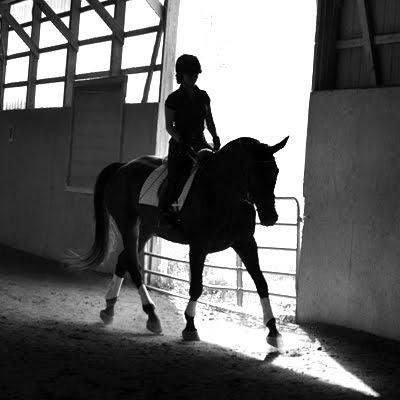 EMJ Equine