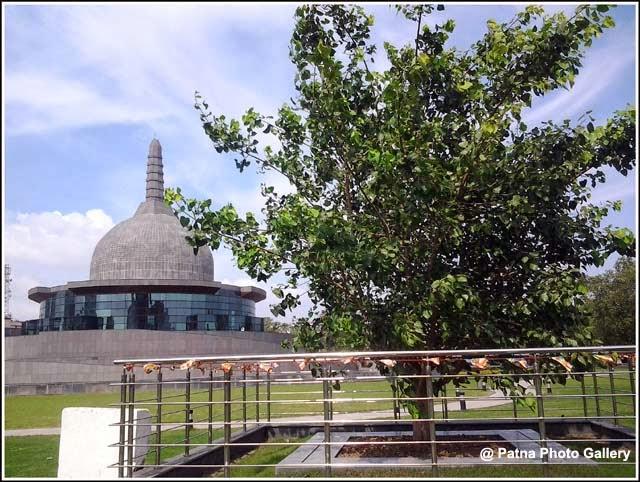 Sacred Bodhi Tree Sapling Buddha Smriti Park
