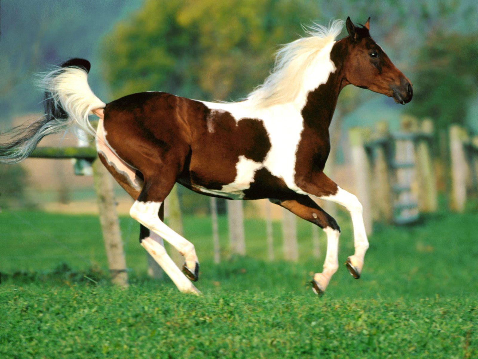 Beautiful   Wallpaper Horse Laptop - 1269137800-XFS97P7  Graphic_13834.jpg