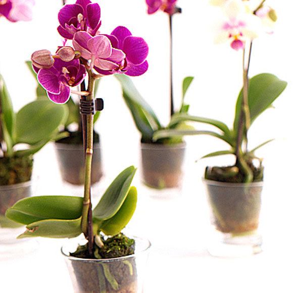 Asesor inmobiliario valencia venezuela decora tu hogar - Flores para decorar la casa ...