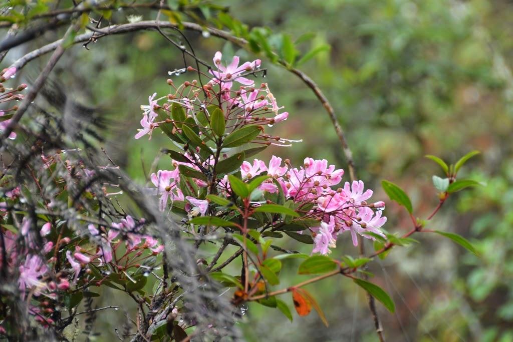 Waynapicchu flowers