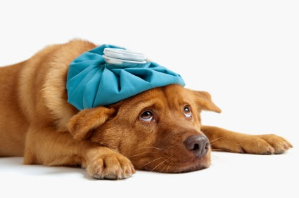 Manage Pet's Prescription Online at Walgreens.com