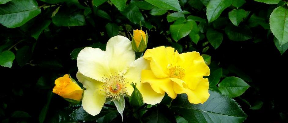 Pistes par couleur des fleurs