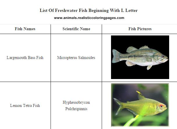 Freshwater fish names starting with l animals name a to z for Gold fish names