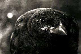 I'm Watching You ;o)
