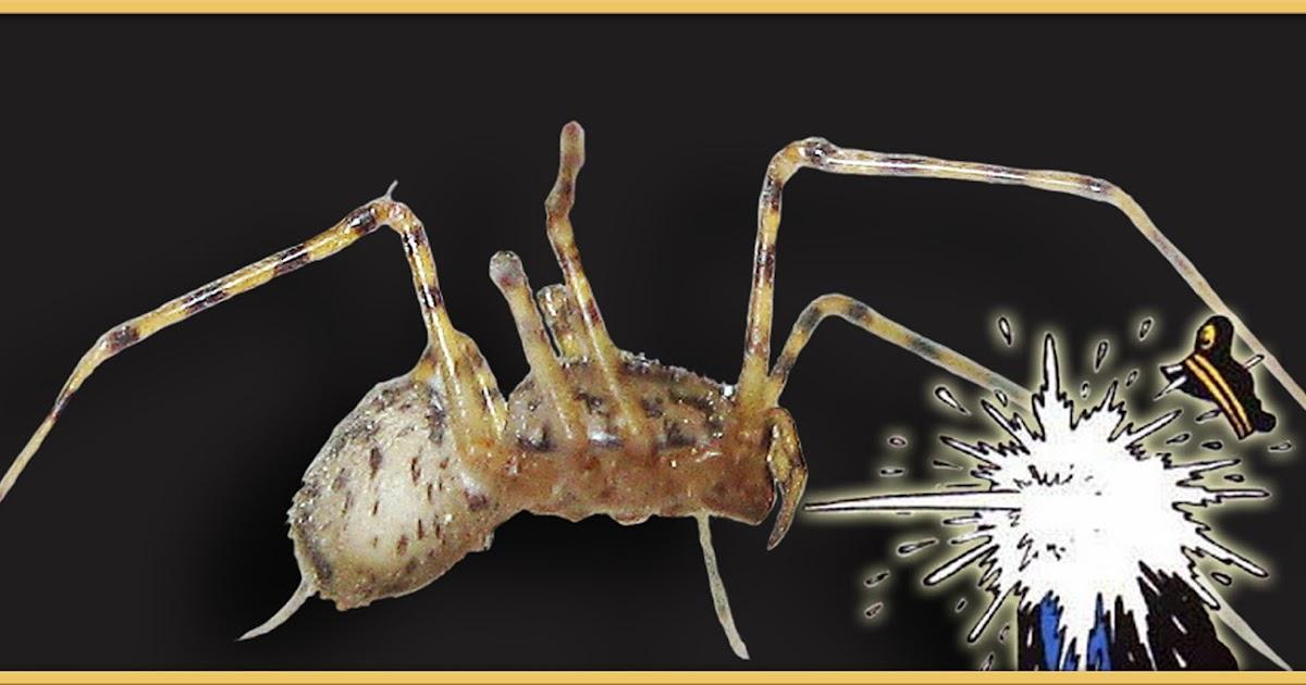 les cogitations de colochat mille sabords une araign e. Black Bedroom Furniture Sets. Home Design Ideas