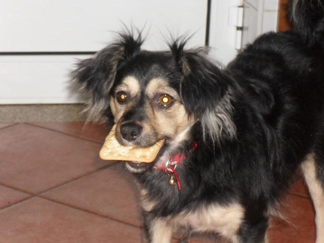 """""""O Cão que toma Prozac"""" in Diário do Minho 18 Fev 2011"""