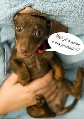 Imagens de Cães fofos para postar no Facebook