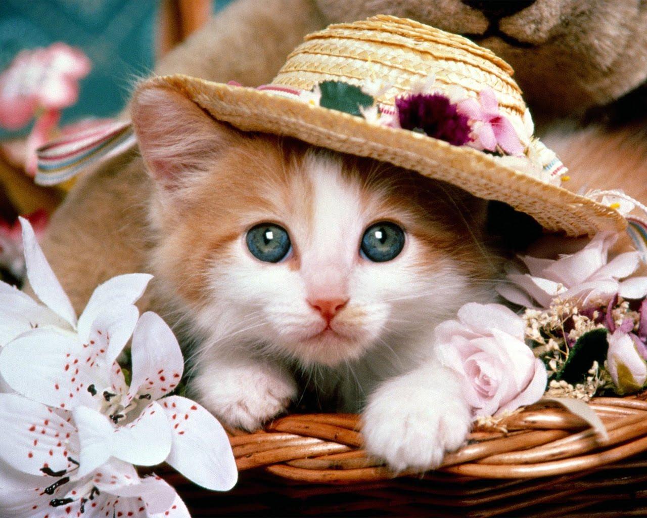 http://4.bp.blogspot.com/-nlbSMRIbHFk/TW930J7qWvI/AAAAAAAAFnY/u9M1j3q4D60/s1600/cat%2B2.jpg