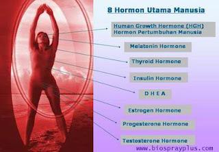 Ada 8 hormon utama pada manusia.