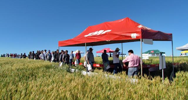 Roncador: Produtores rurais participam do Dia de Campo realizado pela Agroexata