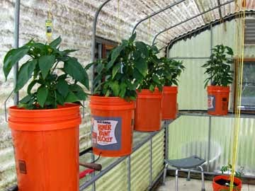 Setting up fall greenhouse garden