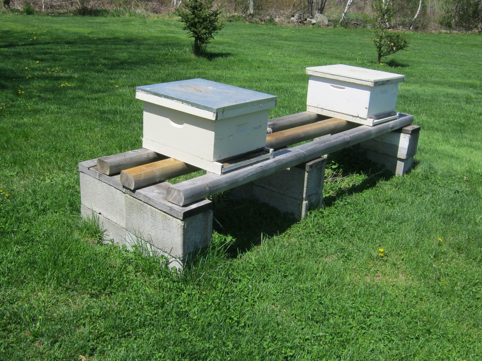 Hive Stand Designs : Steven s bees first outdoor bee meeting and a quick check