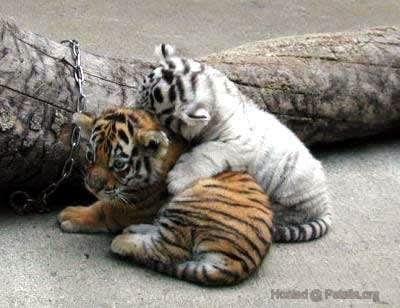 Hình con vật xinh dễ thương ngộ nghĩnh nhất, ảnh đẹp