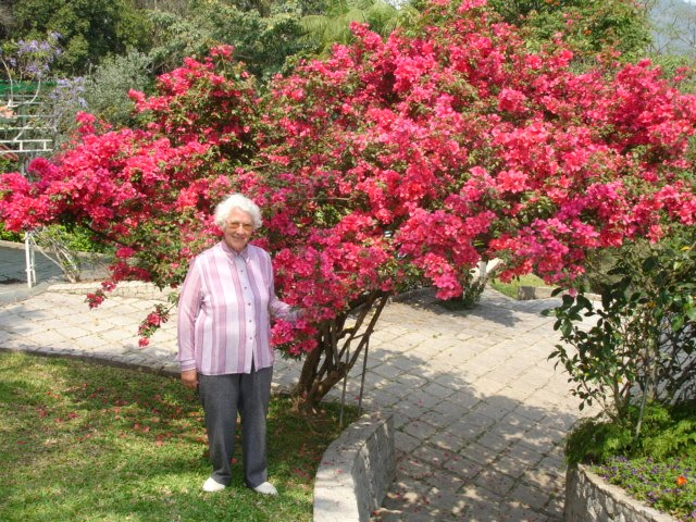 Garimpo De Plantas O Jardim De Oma Av Em Alem O O