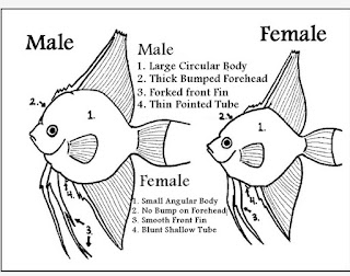 Info science how 2 identify a fish is male or female for Girl fish names
