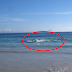 A Tourist Filmed Dark Spots Swimming and Was Horrified When They Reached the Shore