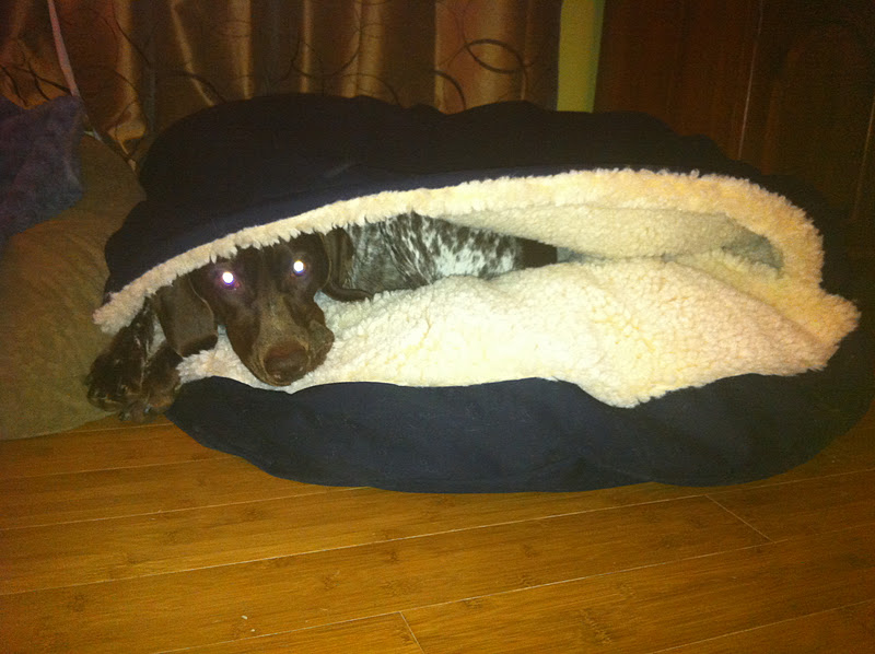 check us out and like us on facebook adventures of a german shorthaired pointer - Cozy Cave Dog Bed