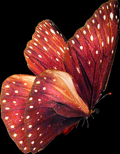 Png kelebek gifleri