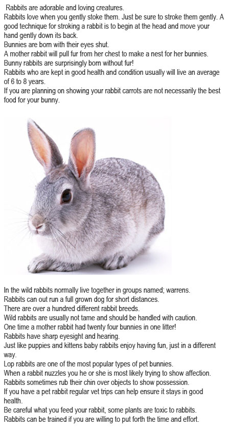 Facts about bunnies for kids