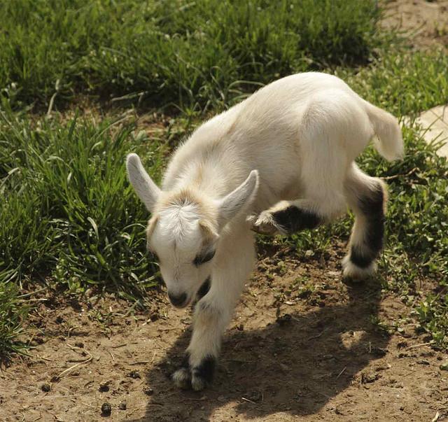 photos of baby animals