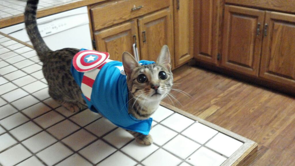 Funny cats - part 174, funny cat photo, cute cats, cat pictures