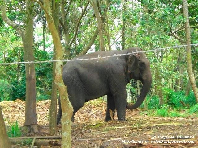 Mon premier voyage au Sri Lanka