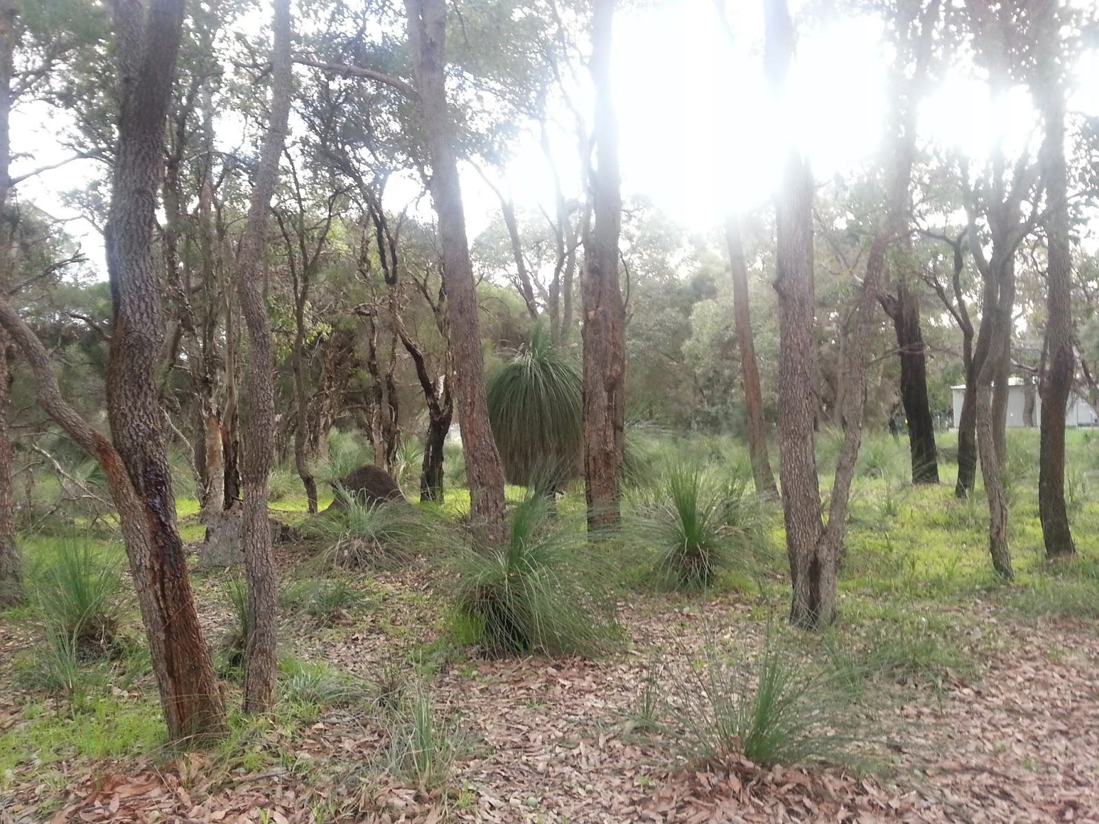 how to go to caversham wildlife park from perth city