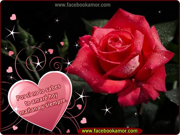 Imágenes de flores de rosas para etiquetar en facebook