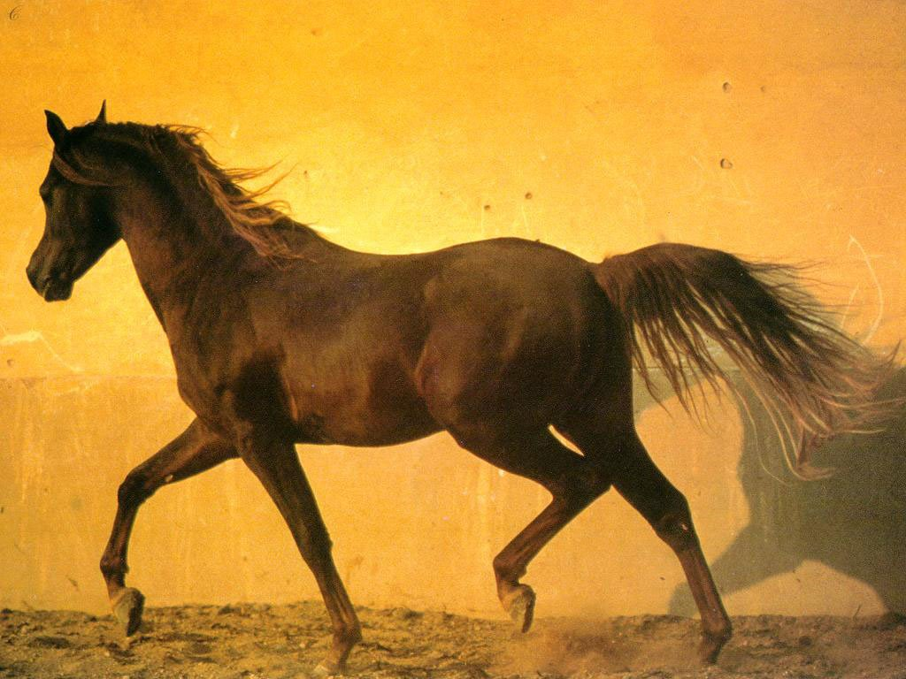 Top   Wallpaper Horse Yellow - 3  Best Photo Reference_661094.jpg