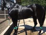 Idroterapia per Cavalli