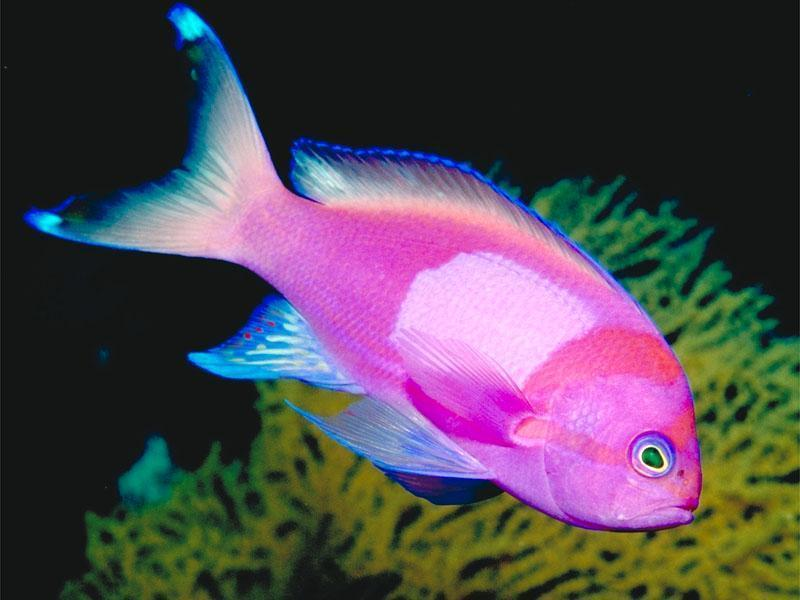 tropical fish wild life animal