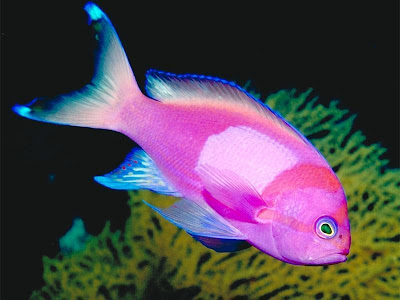 Tropical fish wild life animal for 99 5 the fish