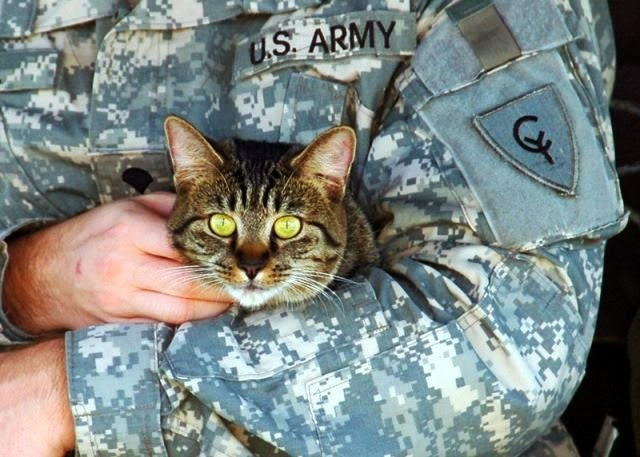 Military With Animals