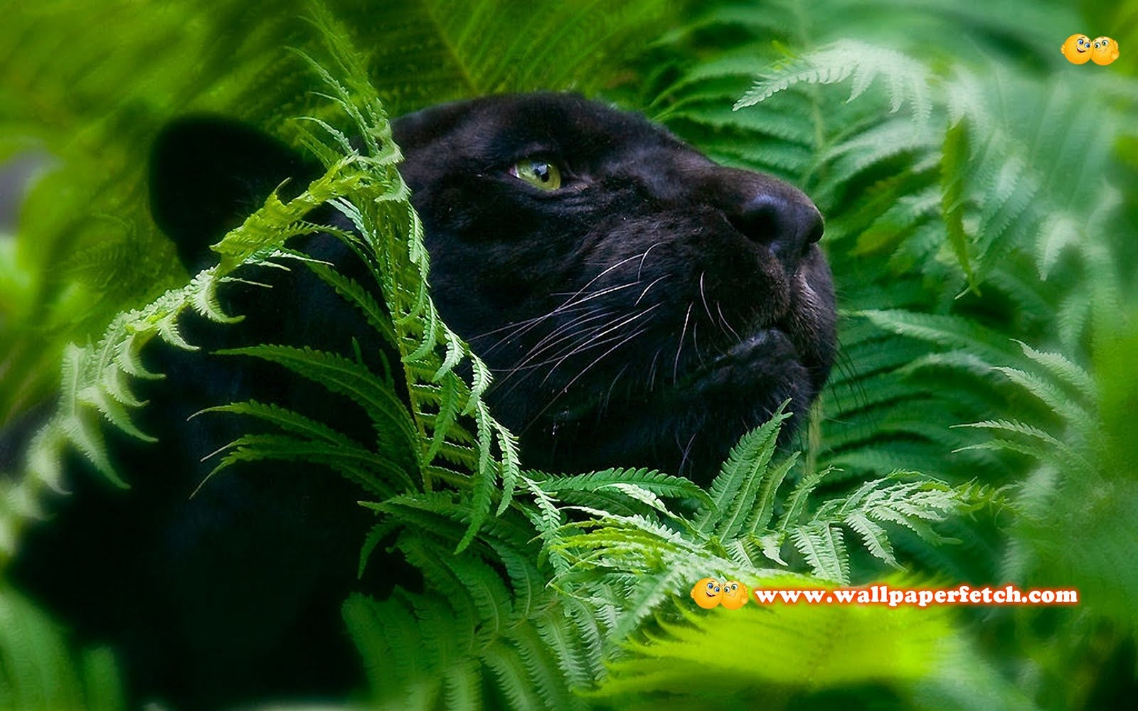 http://4.bp.blogspot.com/-npPYuaexAx4/TvH9RiiKAQI/AAAAAAAABkE/AkHzjsuYXpw/s1600/SuperPack_Beautiful_Animals_HD_Wallpapers_Part_4.37.jpg