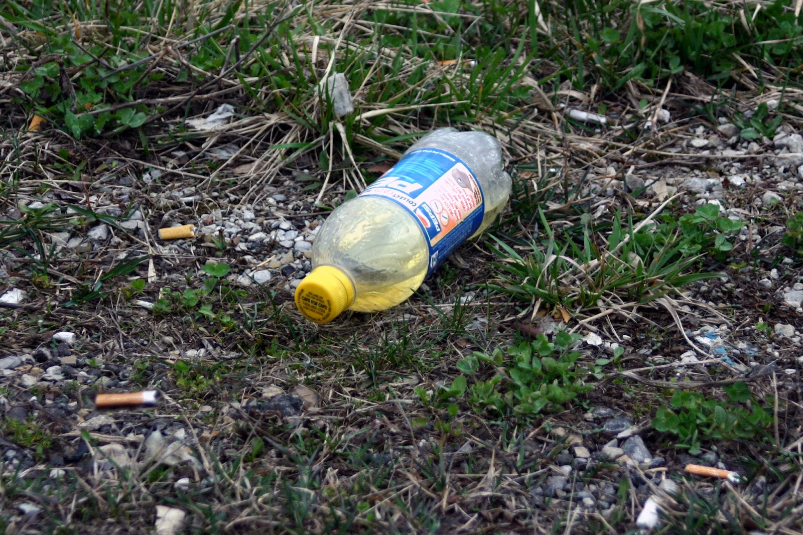 Change The World Wednesday (#CTWW) - Litter