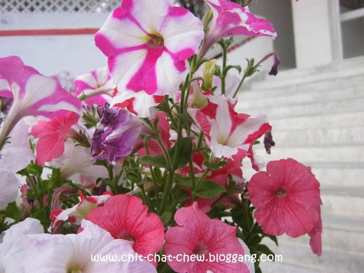 Flowers at Madhuban