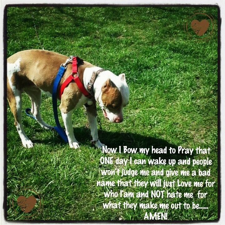 Is Cross Breeding Dogs Illegal