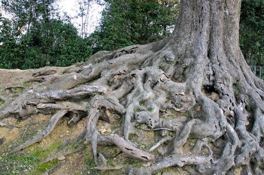Eurd gabon arretez de souffrir 2011 08 28 - Comment faire crever un arbre sans le couper ...
