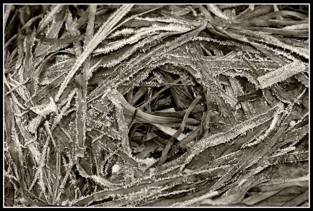 Nova Scotia; Seaweed; Frost; Ice
