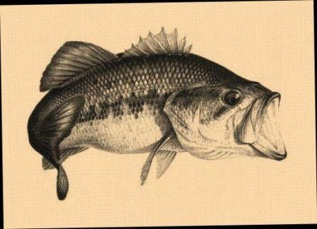 Black Bass Tips Dan Trik Memancingnya