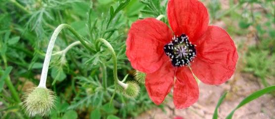 Las mejores imágenes de flores en el mundo (33 fotos  - Fotos De Flores Naturales Y Sus Nombres
