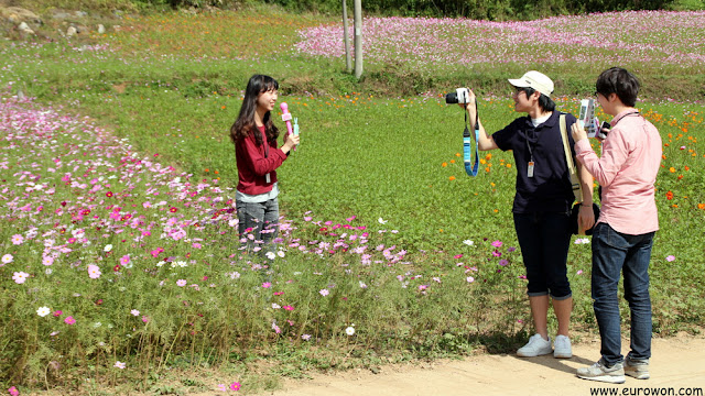 Coreanos grabando vídeo sobre flores cosmos