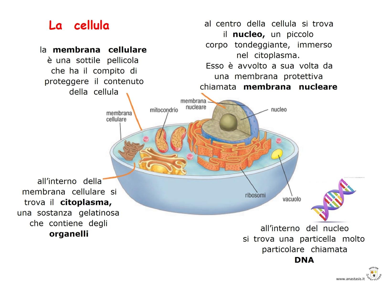 Célèbre Paradiso delle mappe: La cellula NL51