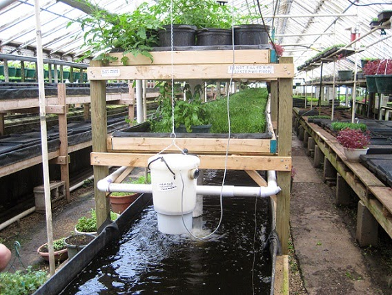 Aquaponics_at_Growing_Power.jpg (568×427)