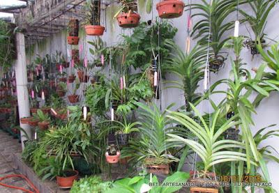 Blog da Bete orquideas