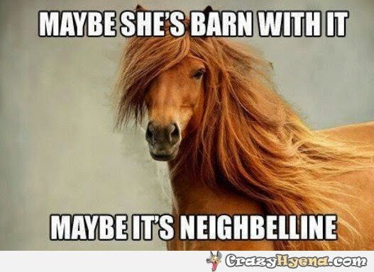 photogenic horse meme