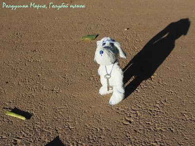 голубой щенок тедди