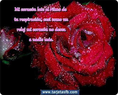 Corazones y flores on pinterest amor imagenes de amor and gifs