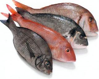 هل أكل السمك و شرب الحليب أو اللبن في نفس الوقت يضر بالانسان؟
